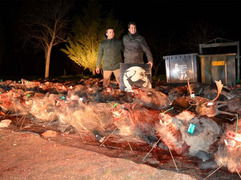 Resultado Montería La Cizaña 2 2018 Iberian Hunting