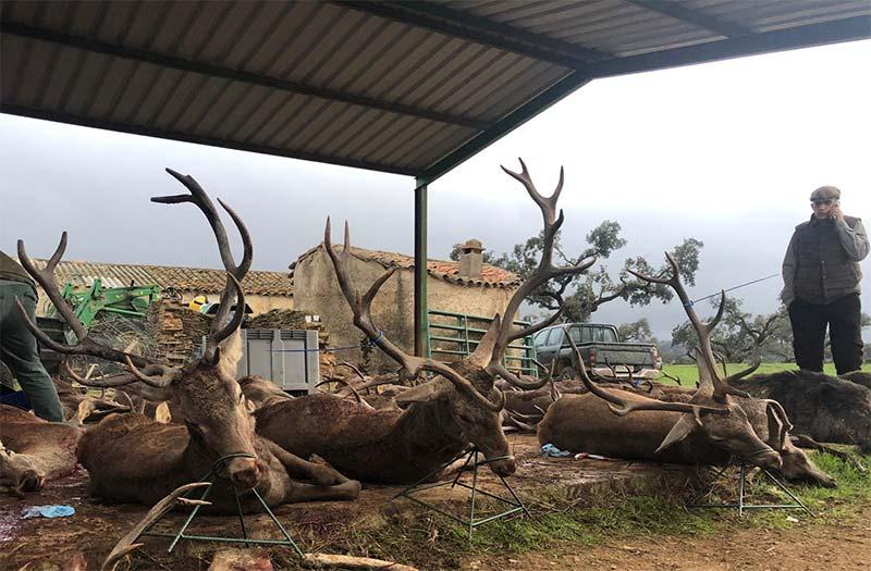 Resultado Montería Cuadrillas de Montesinos 2019 Puebla y Estellez