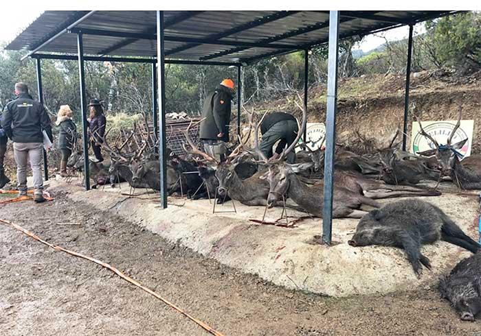 Resultado Montería Hoya de Guadarranque 2019 Pelillo S C